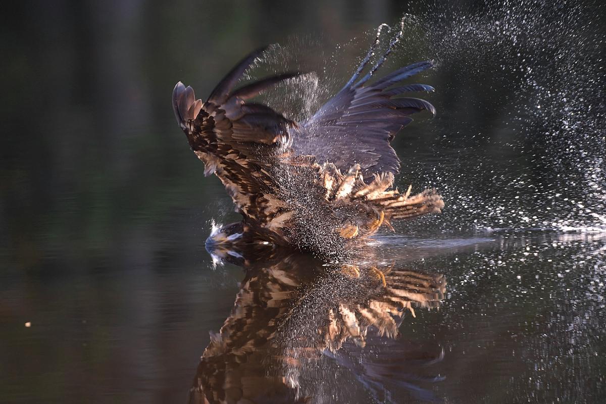 Adler sind keine Flugkünstler